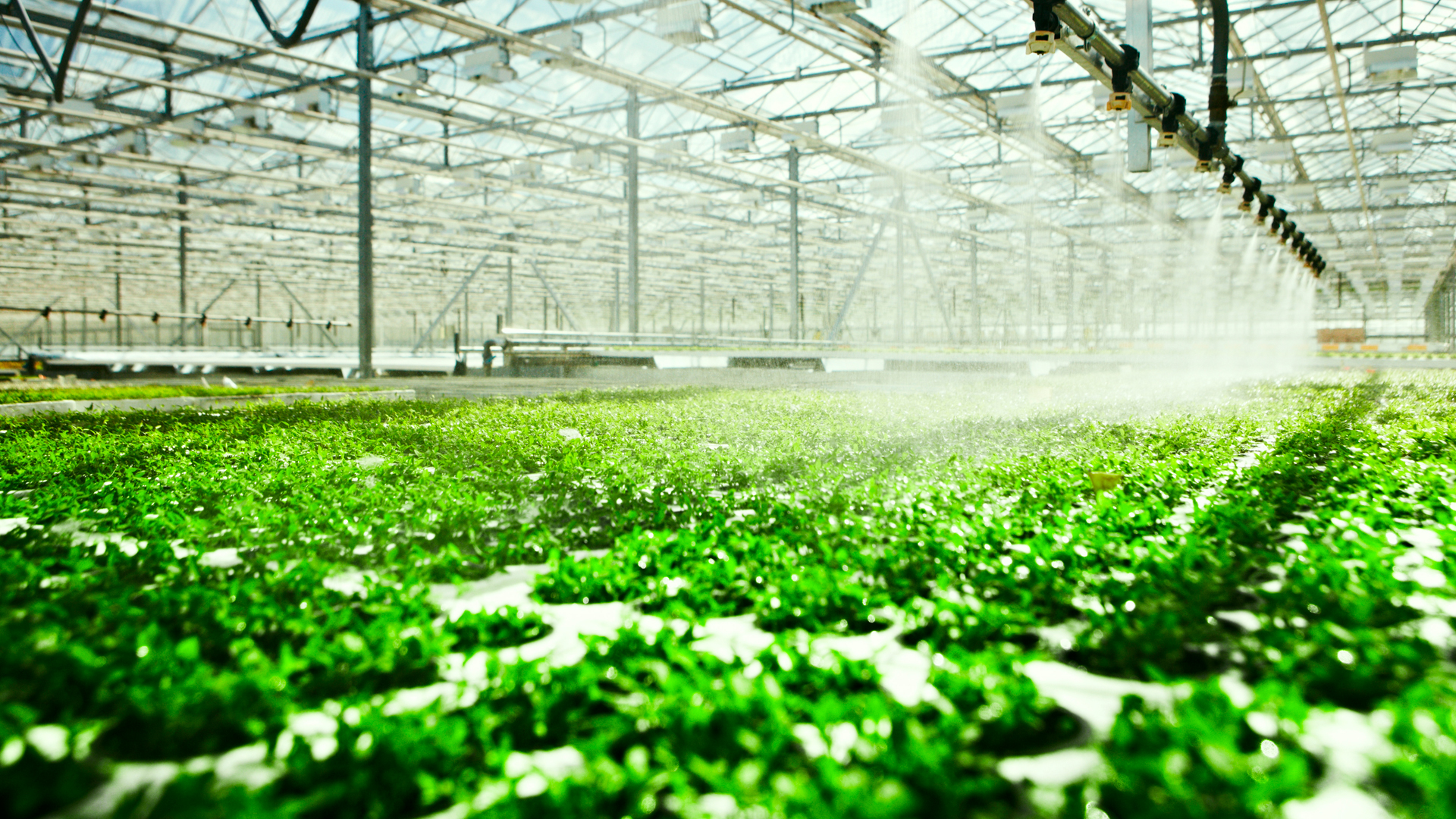 3032307-poster-p-1-the-internet-of-things-meets-hydroponics-how-to-grow-a-better-vegetable